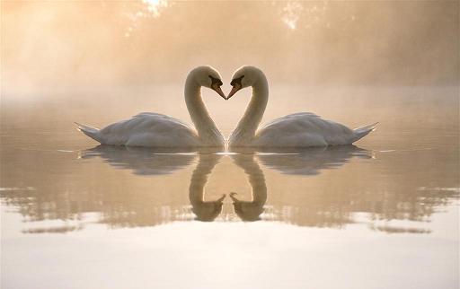 修行人要有感恩之心,尤其是在享受福報的時候,更要感恩所有眾生的賜予:我們感恩父母、師長、國家、社會的栽培,感恩親友照顧,甚至感恩很多不認識的人,由於他們的犧牲與奉獻,我們才得享其果。如果能有這種廣大的愛心,就能在自己最清淨的時候,相應我們內在的靈性本尊。~悟覺妙天禪師,《佛祖心印》