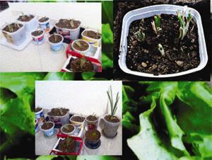 Faça uma horta no seu apartamento