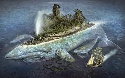 شاهد بالفيديو ... اكبر حوت فى العالم - white whale