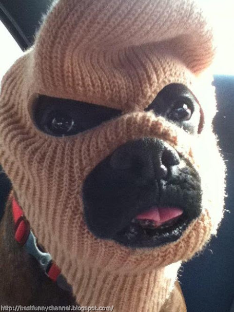 Funny puppy 16