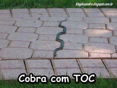 cobraTOC.png (480×359)
