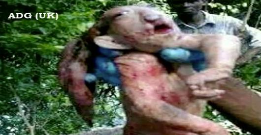 Goblin - Phenomena