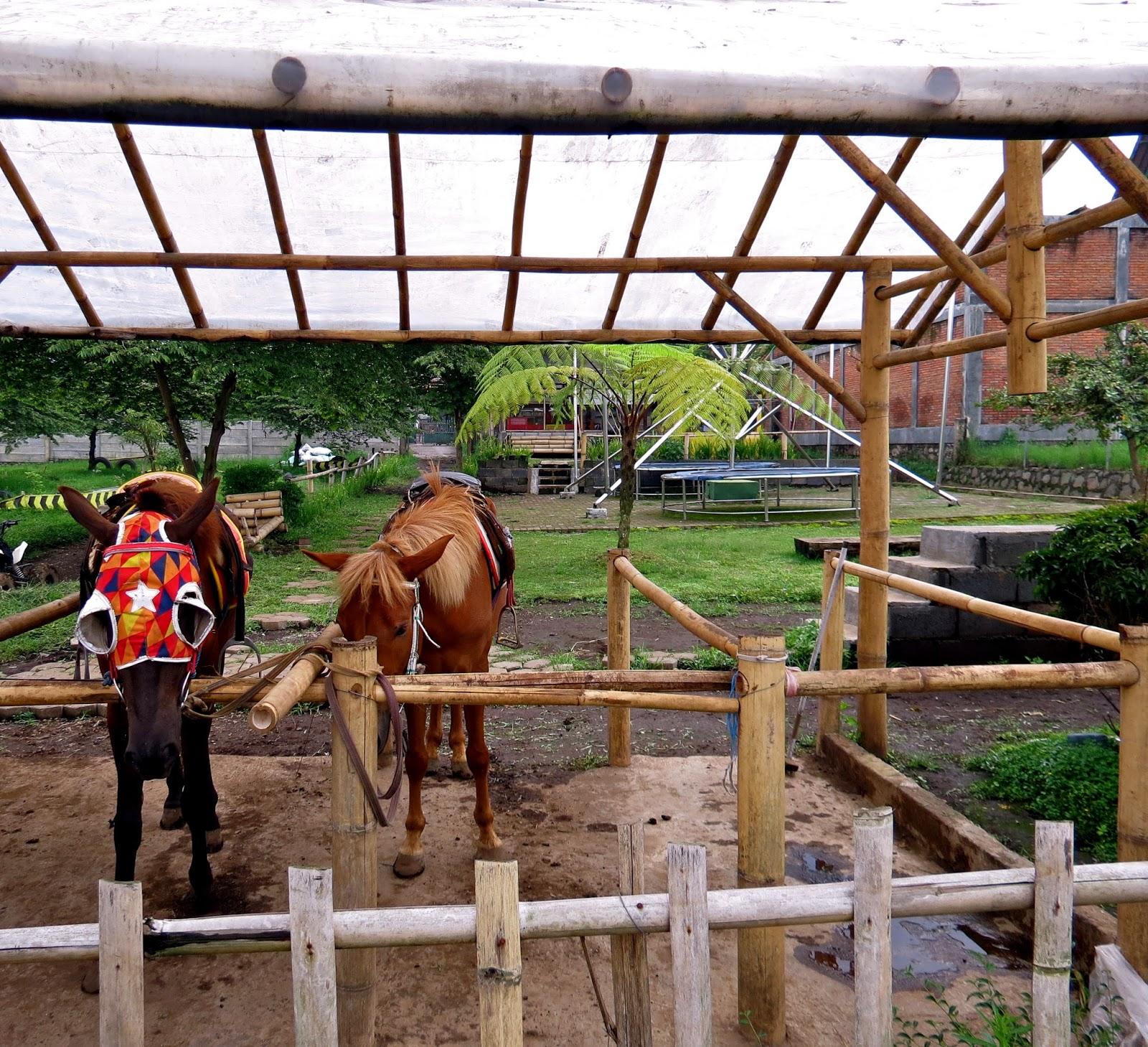 bandung horses
