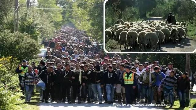 ΑΣΦΥΞΙΑ! Πρωταθλήτρια Ευρώπης στην λαθρομετανάστευση η Ελλάδα - Τώρα έρχονται και από τον Έβρο...