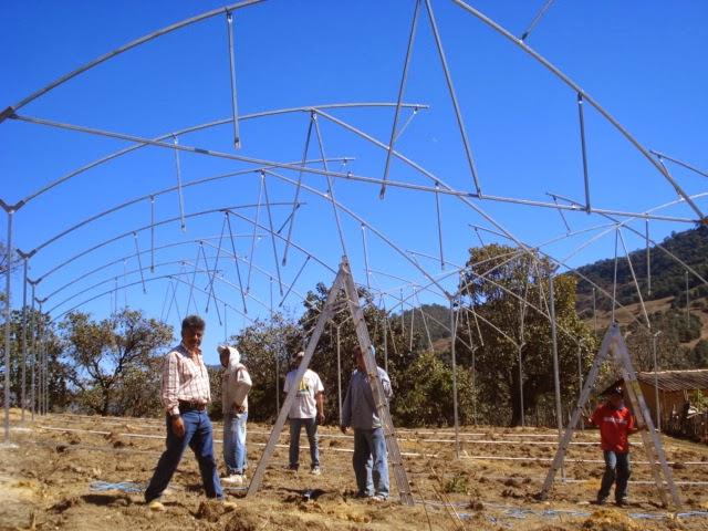 Agro tlapa for Construccion de viveros forestales