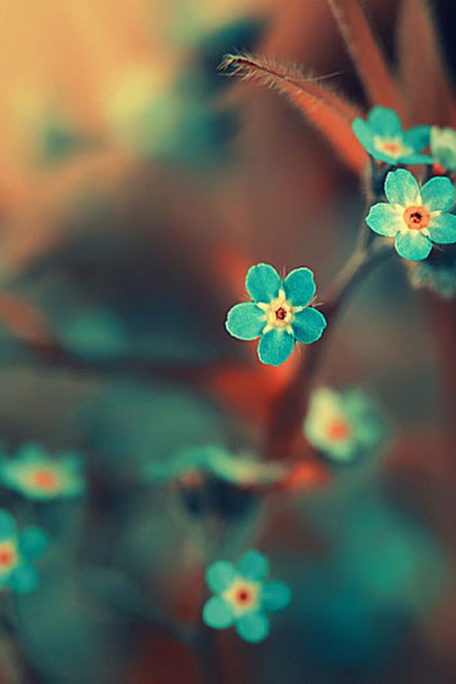 Flowers Iphone 5 Wallpapers