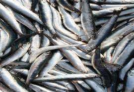 ictus e pesce azzurro