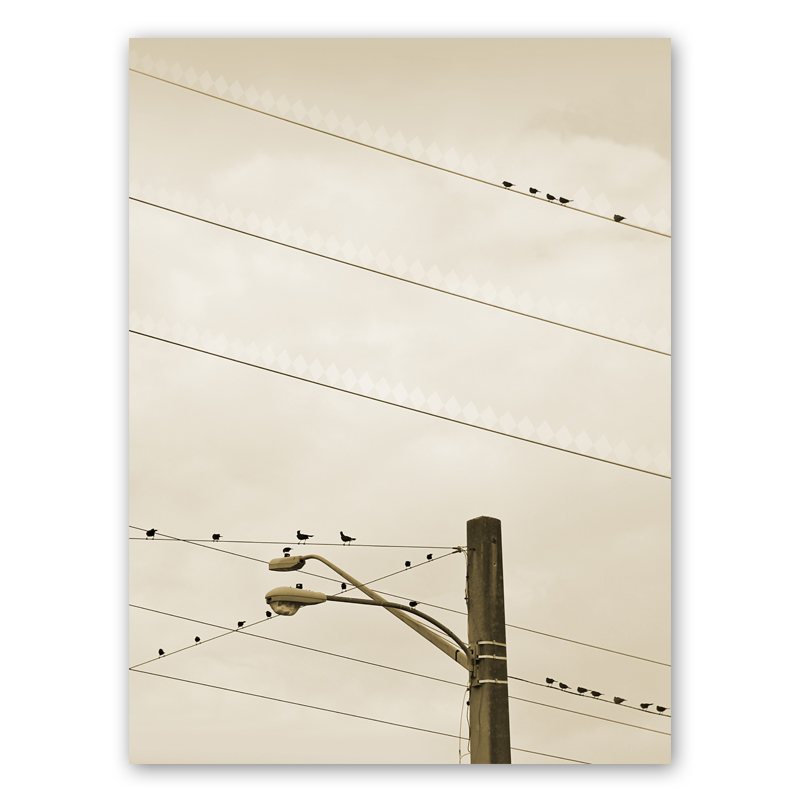 Birds i webbshoppen: Studio Caro-lines