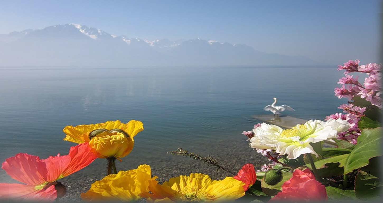 Цветы на фоне моря и неба фото