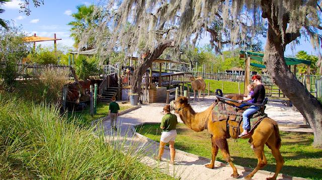 Zoológico Lowry Park em Tampa