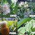 Nama-nama Kembang (Bunga) dalam Bahasa Sunda