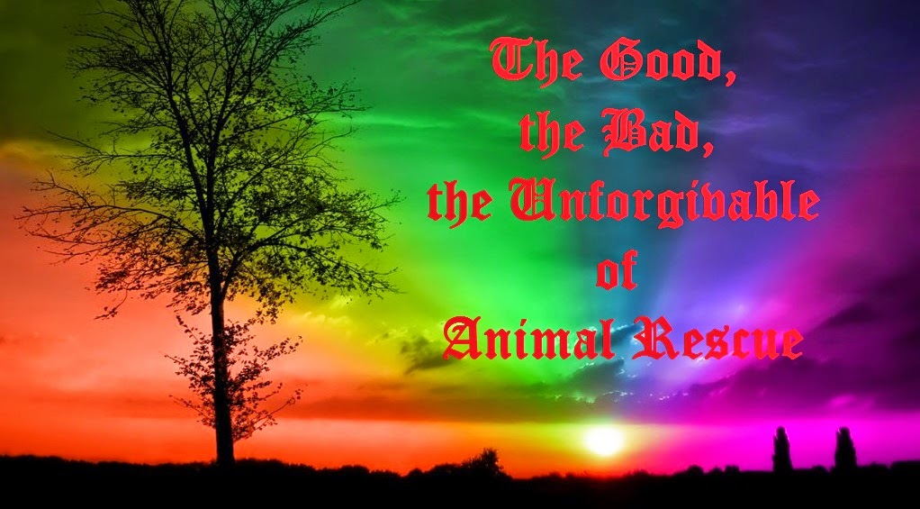 The Good, the Bad, the Unforgivable of Animal Rescue