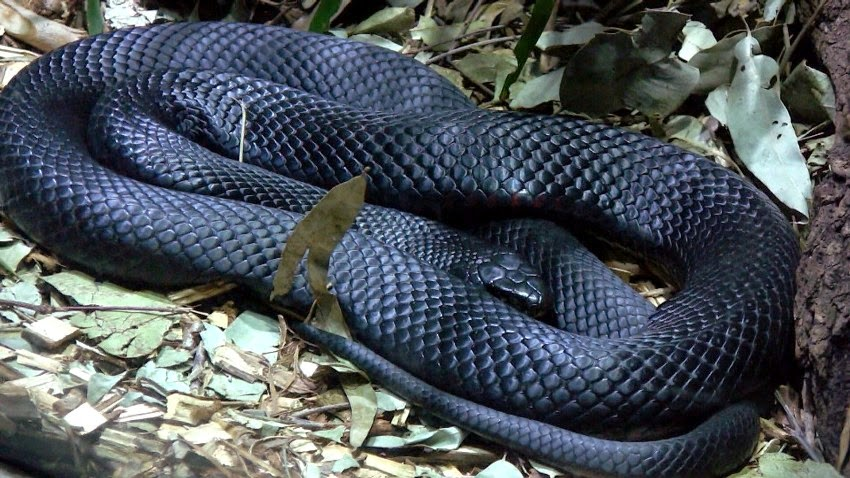 Top 10 Most Poisonous Snakes in the World   Top 10 Catalog