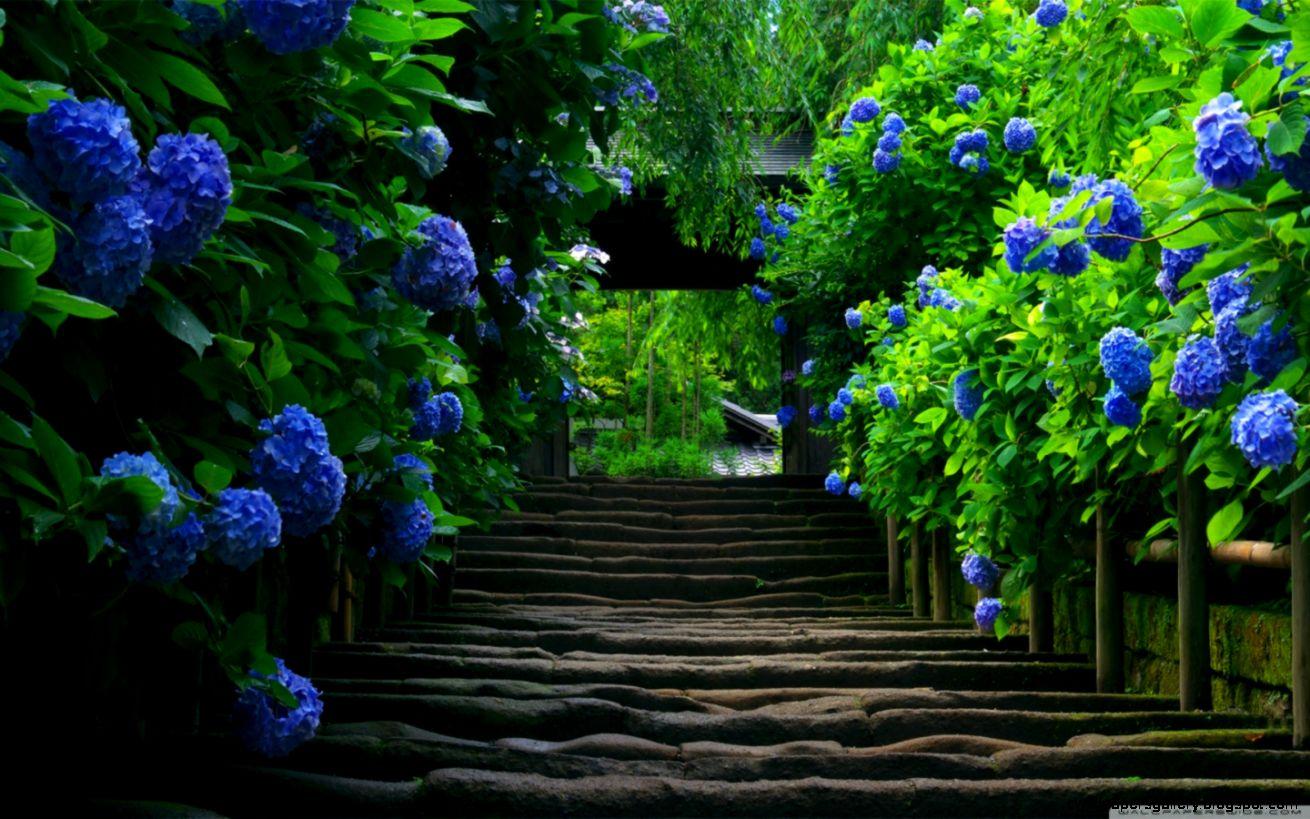 Japanese Garden   Stairs HD desktop wallpaper  Widescreen  High