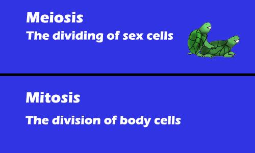 do my biology essay