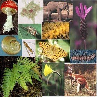 Elementos bi ticos ciencia geogr fica for Plantas fundamentales