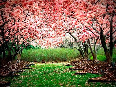 syukur nikmat keindahan alam