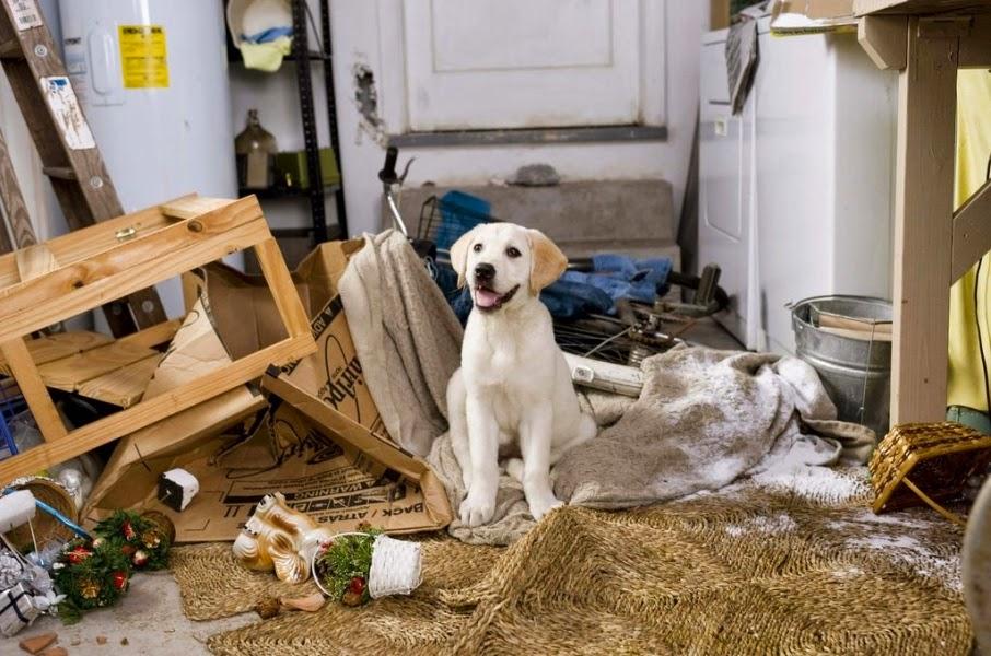 perro decorando la casa