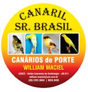 CANARIL SR BRASIL