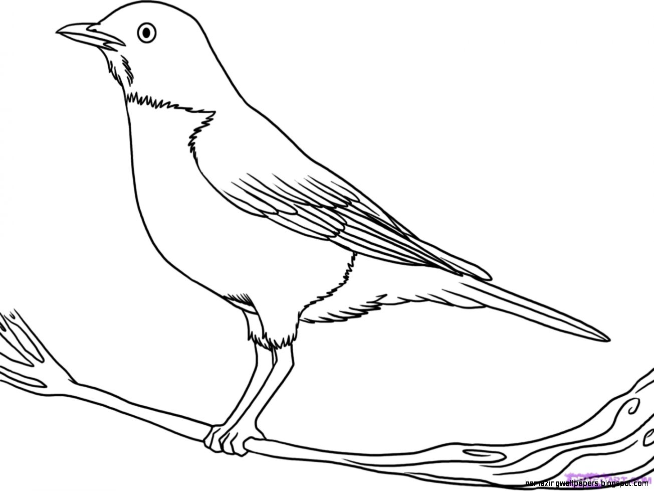 Line Art Birds : Bird line drawing amazing wallpapers