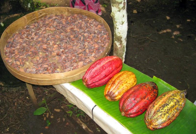 Happy Us Book - Indonésie - Cacao