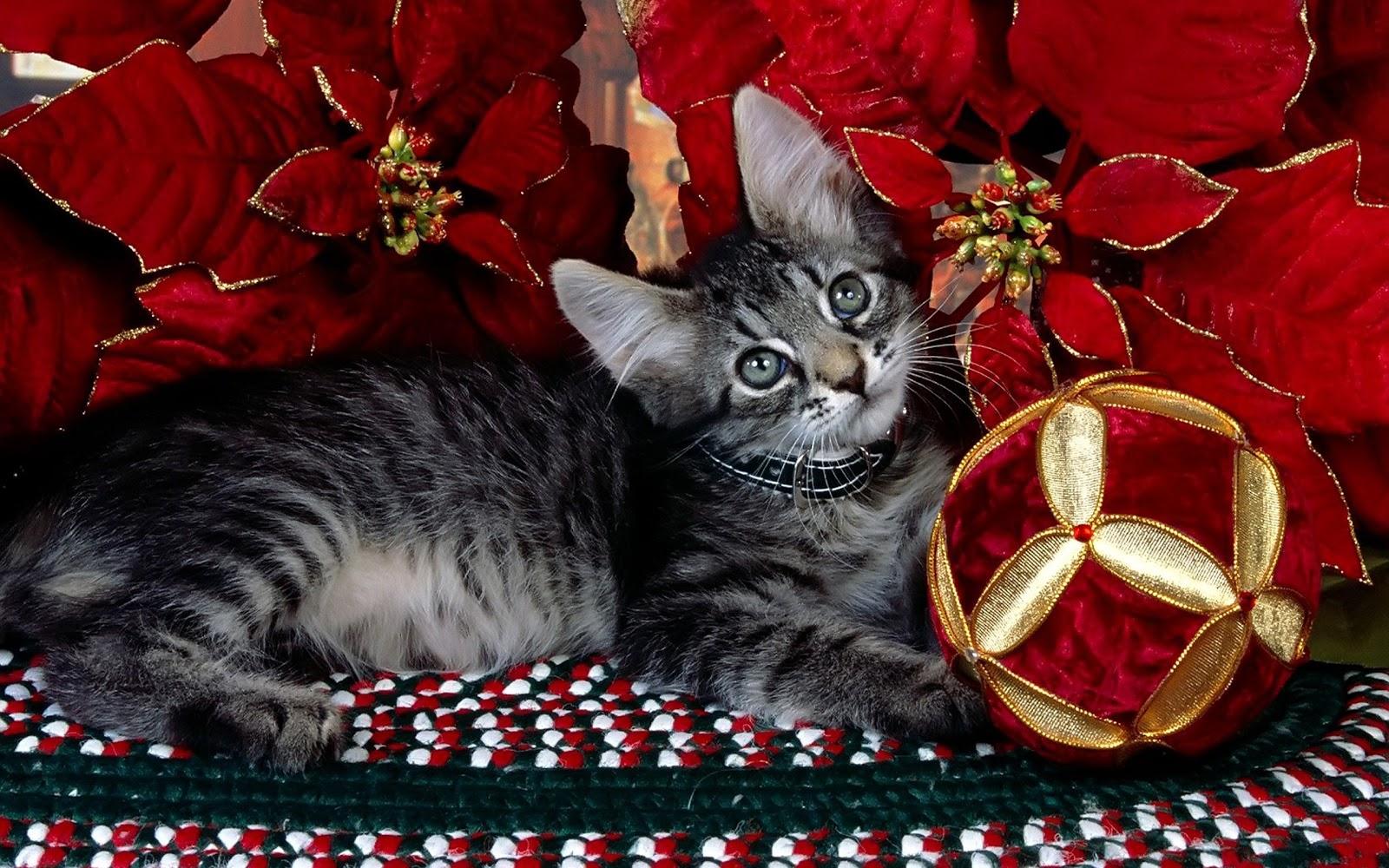 el blog de los gatitos especial navide o cuarto. Black Bedroom Furniture Sets. Home Design Ideas