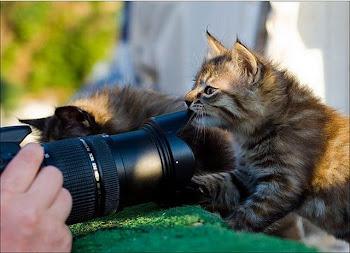 kucing pon pandai capture foto