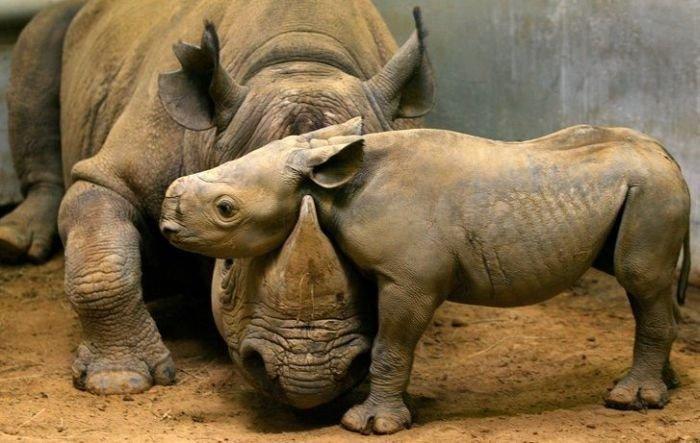 inan%25C4%25B1lmaz+hayvan+resimleri27 İnanılmaz hayvan resimleri vahşi hayat.