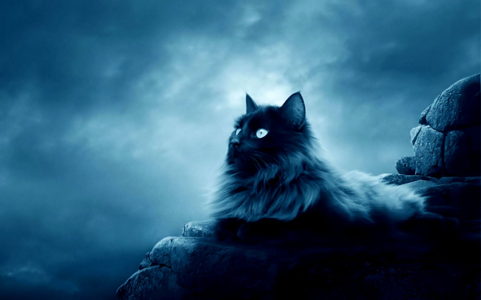 5567 Cat HD Wallpapers  Backgrounds   Wallpaper Abyss