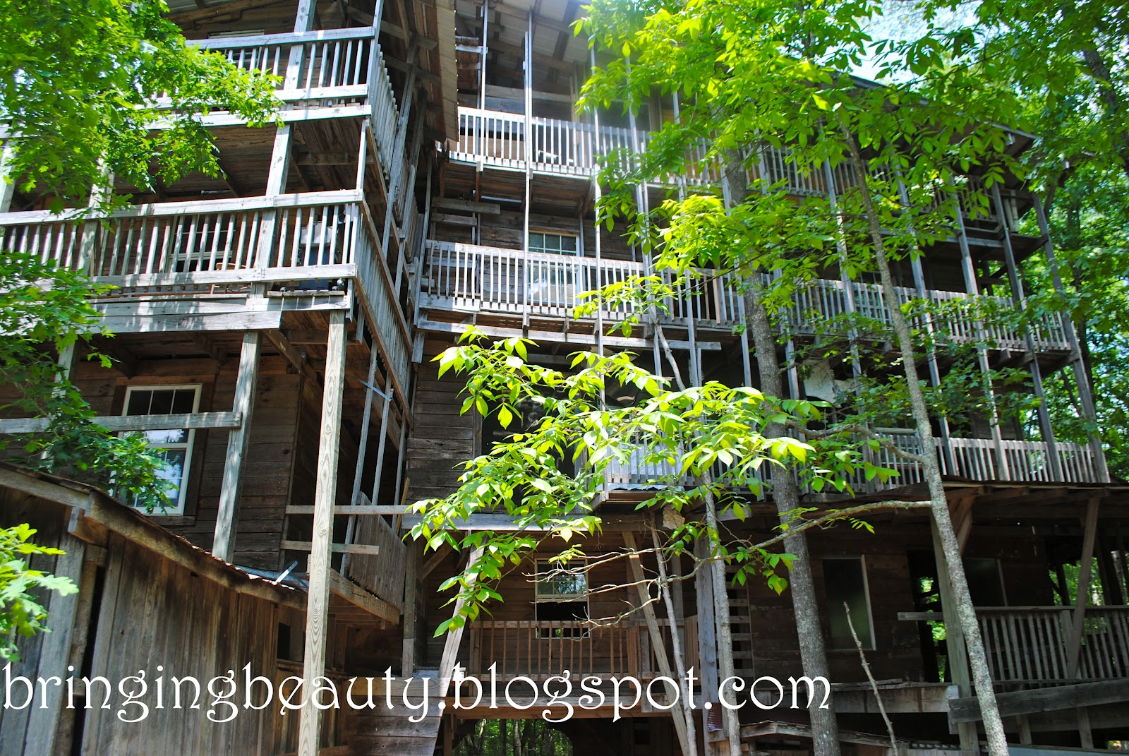 Biggest House In The World 2012 bringing beauty: america's biggest tree house!!