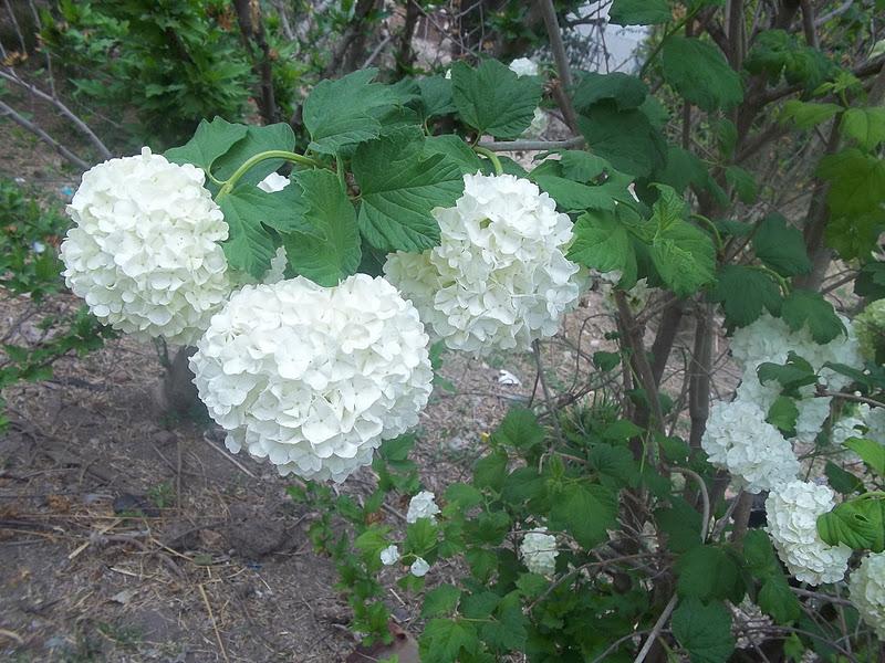 Sol y luna huerta organica flores en mi jardin for Plantas para huerta organica