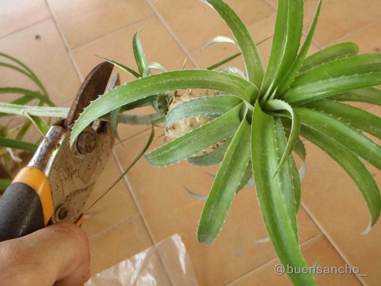 Buensancho jardinero pi a de jard n for Aspiradora de hojas de jardin