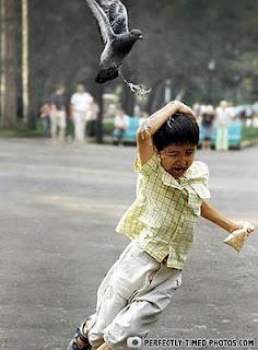 gambar aneh,gambar pelik 2011,gambar budak diberak burung,gambar skill photography yang menarik,perfectlytimedpictures.com,gambar yang lucu
