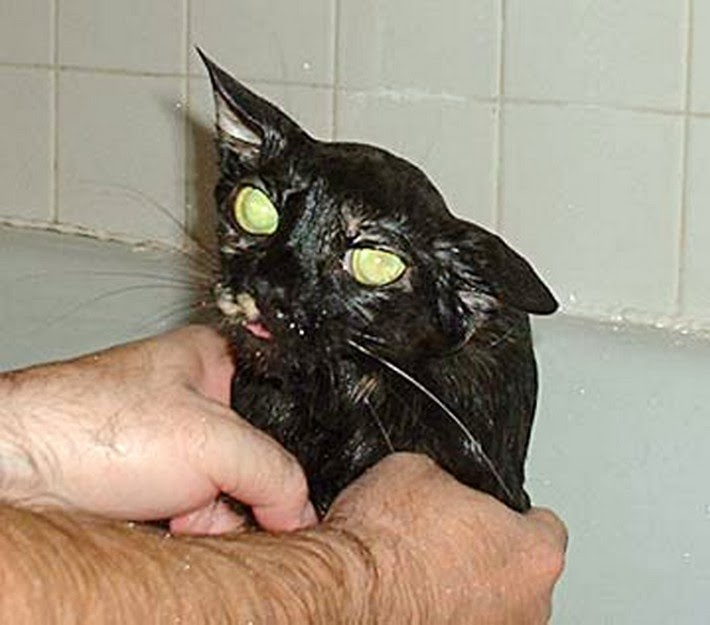 cat looking wet after bath