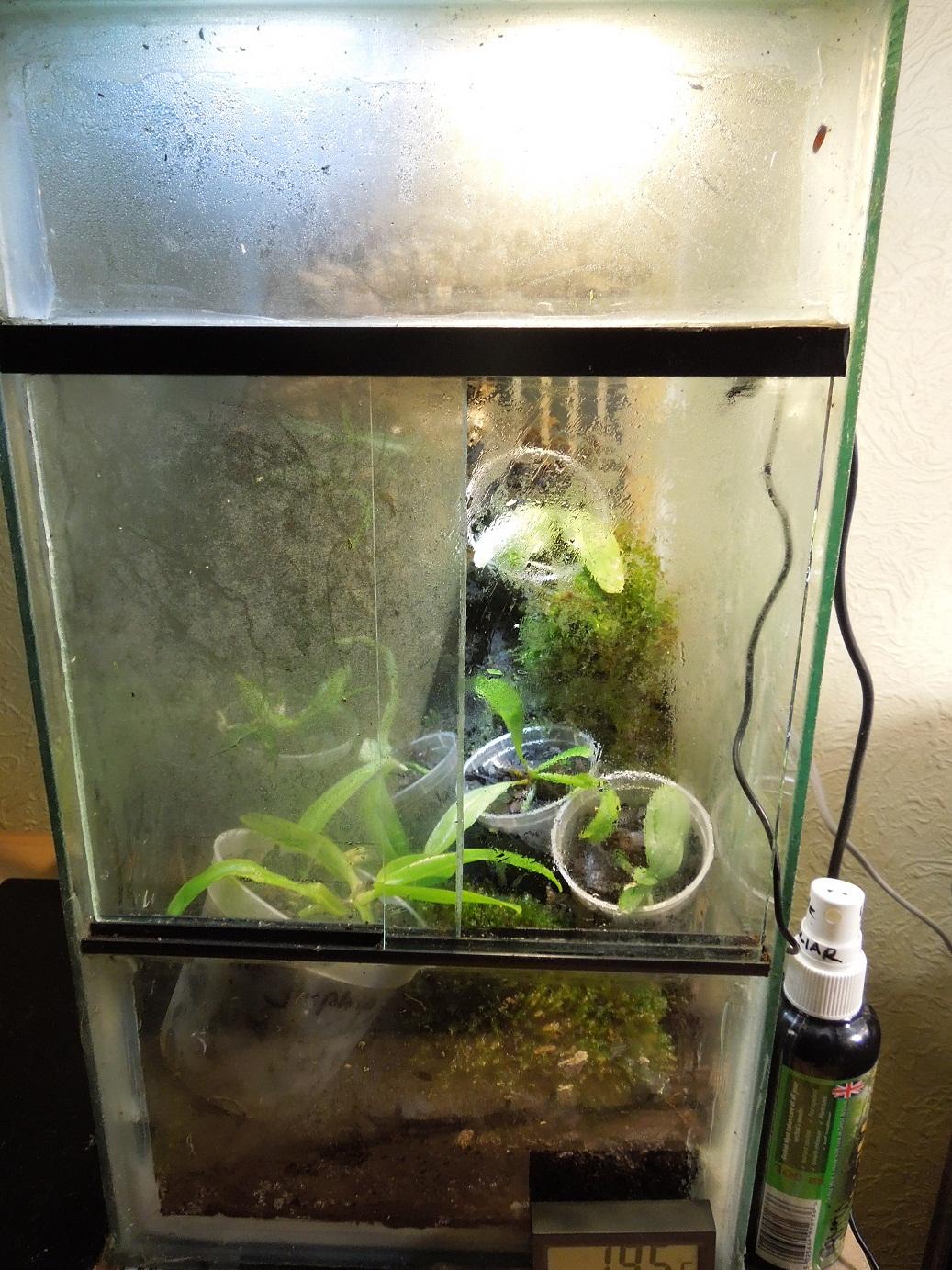 ORCHIDS & ME: PHALAENOPSIS ORCHID SPECIES SEEDLING NURSERY #5F4C2C