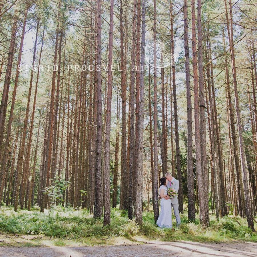pulmafoto-laulsamaa-mets