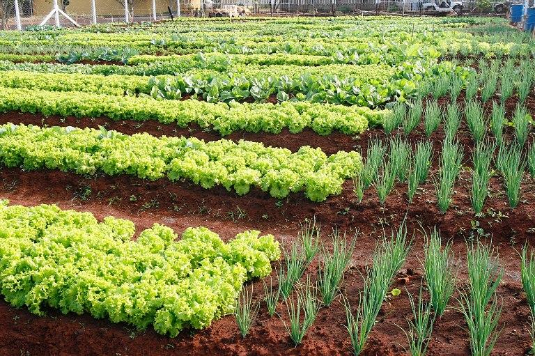 Meio Ambiente Técnico~ Fotos De Horta No Jardim