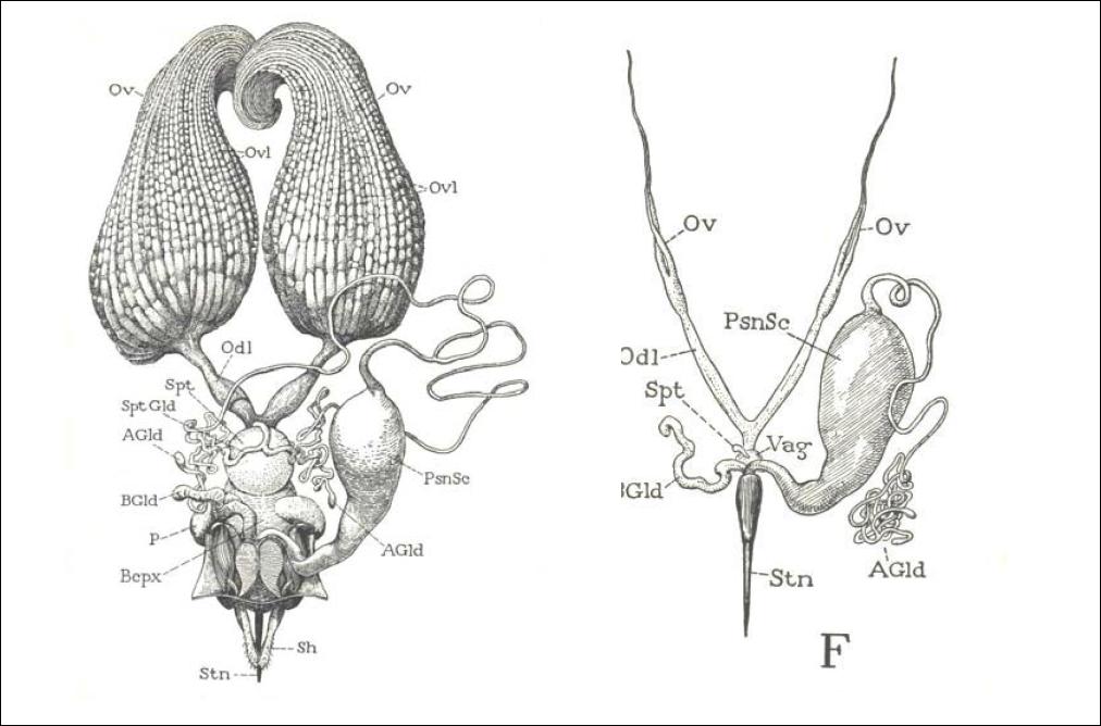 Materia: Anatomía y Fisiología: Trabajo Práctico: Morfología Externa ...