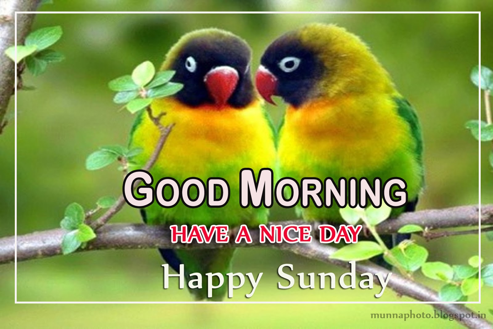 Love Birds Good Morning Wallpaper : Munna Photo: cute-love-birds-good morning--photos-background