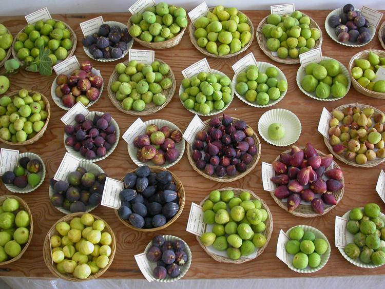 Antonio bruno esperto in diagnostica urbana e territoriale for Piante antiche da frutto