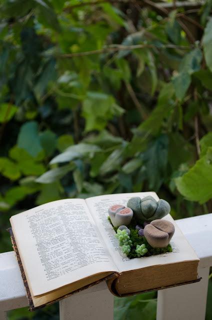 aesthetic fauna // succulent book planter DIY