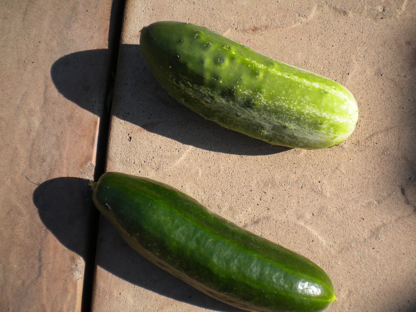 how to make dill pickles from fresh cucumbers