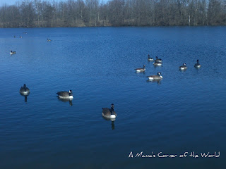 Canadian geese on Shrock Lake from http://www.amamascorneroftheworld.com