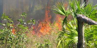 Incendio en bosques de Abaco1