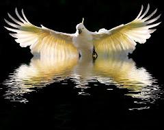 A Paz Invadiu o Meu Coração... Sou a Paz!