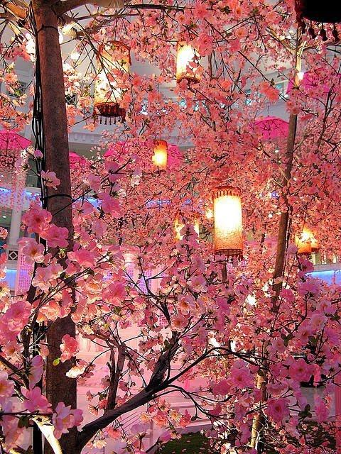 Cherry Blossoms Blossoms com Dating Asian Women Meet