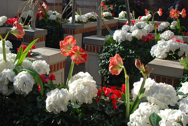 Amaryllis and hydrangeas atop the children's maze... more on this magical conservatory area later!