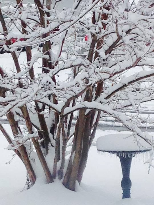 Snow on trees and birdbath.  (c) 2014 Mari Elm