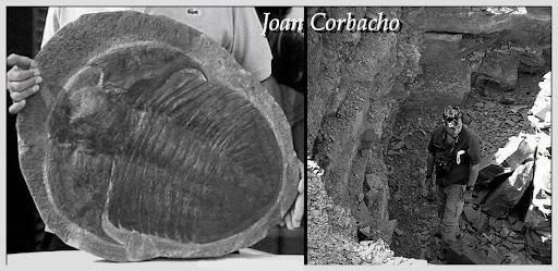 Joan Corbacho - Trilobites