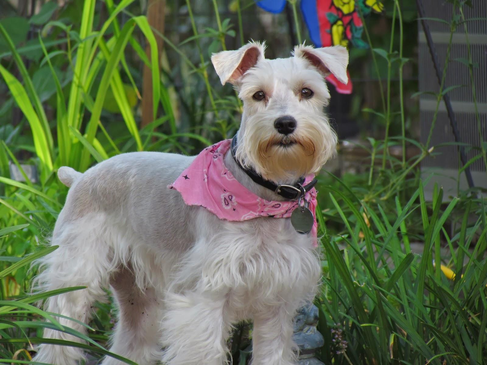Maggie...Garden Helper